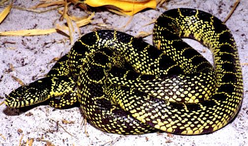todas las serpientes