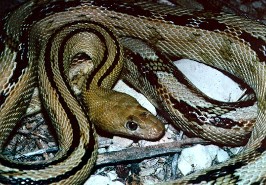蛇类动物图片及名称