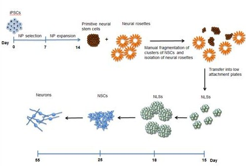 diagram of blood types diagram of blood cells cellular research pgp #11
